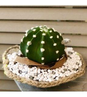 """Coupe Artisanale Cactus originale et unique """"Must Have"""". AnyFleurs.fr"""