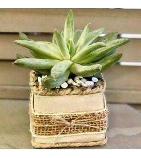 Pot Artisanal Succulente de forme carrée original et unique. AnyFleurs.fr