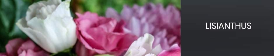 bouquets de fleurs : lisianthis